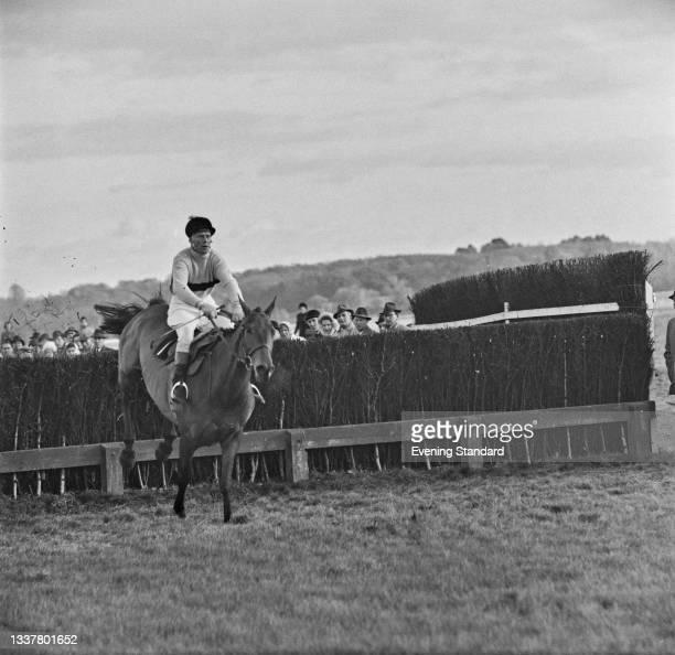 Irish thoroughbred racehorse Arkle, UK, 27th November 1965.
