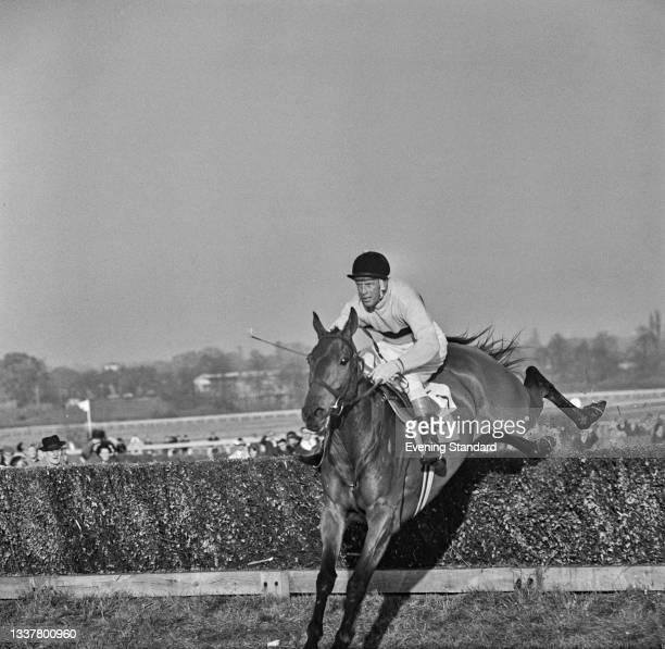 Irish thoroughbred racehorse Arkle , UK, 6th November 1965.