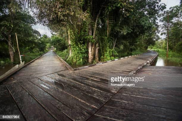 Ironwood boardwalk at a dayak village in Kalimantan