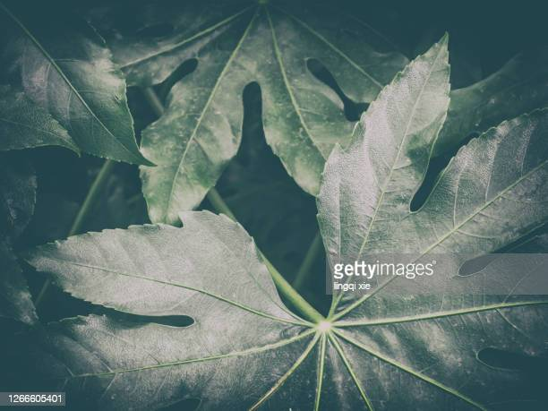 irregular pattern of natural arrangement of leaves - irregular texturizado stock pictures, royalty-free photos & images