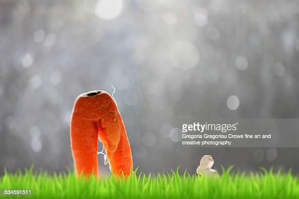 irregularly shaped carrot - gregoria gregoriou crowe fine art and creative photography - fotografias e filmes do acervo
