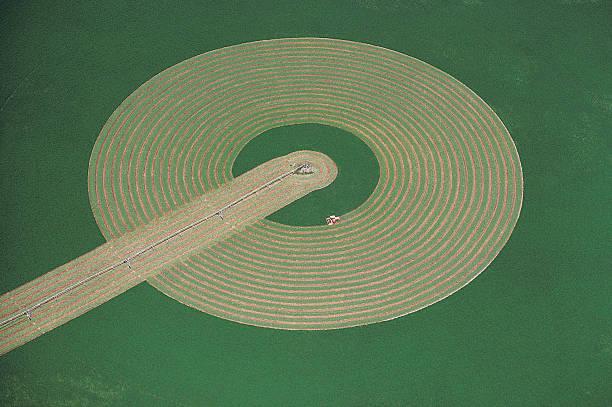 Irrigated Alfalfa field, Eastern Washington, USA