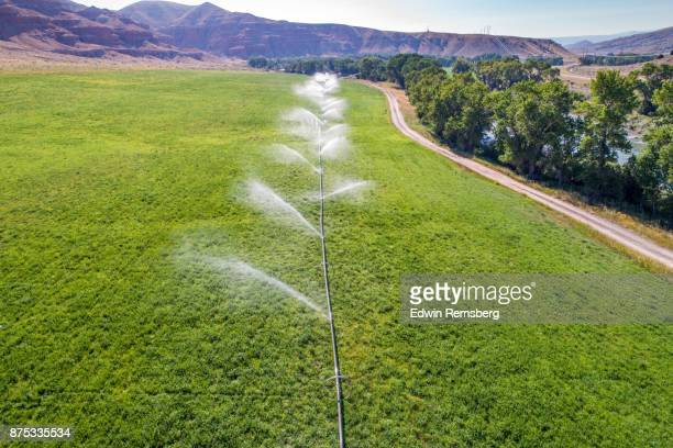 irrigated alfalfa - sprinkler system stock pictures, royalty-free photos & images