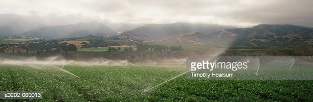 irrigated spinach field - timothy hearsum stock pictures, royalty-free photos & images