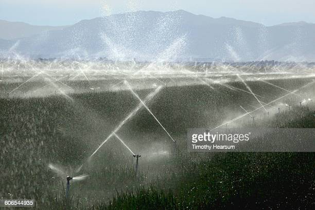 irrigating a field of onions; mountains beyond - timothy hearsum stock pictures, royalty-free photos & images