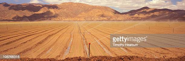irrigating field of newly sprouted carrots  - timothy hearsum stock pictures, royalty-free photos & images