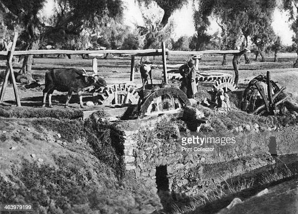 Irrigating fields near Cairo Egypt c1920s Plate taken From In the Land of the Pharaohs published by Lehnert Landrock