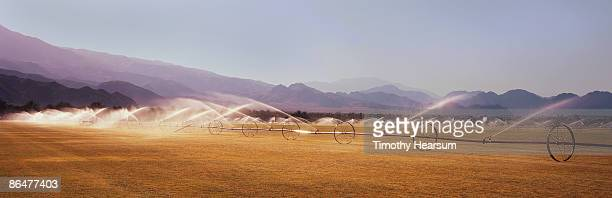 irrigating sod field with mountains beyond - timothy hearsum stock photos and pictures