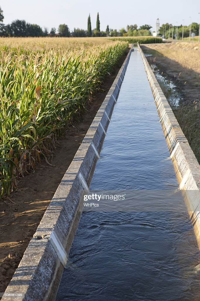 Irrigation canal on corn field : Stock Photo
