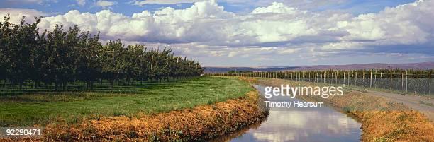 irrigation canal running through apple orchards - timothy hearsum ストックフォトと画像