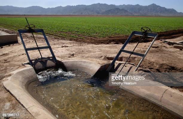 irrigation control structure; lettuce field beyond - timothy hearsum fotografías e imágenes de stock