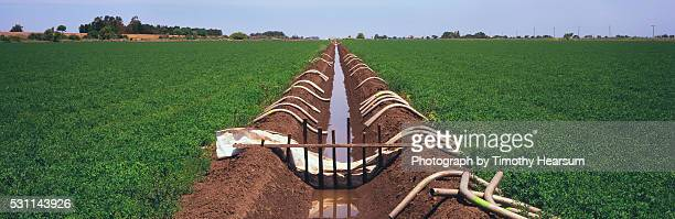 irrigation ditch in an alfalfa field - timothy hearsum stock pictures, royalty-free photos & images