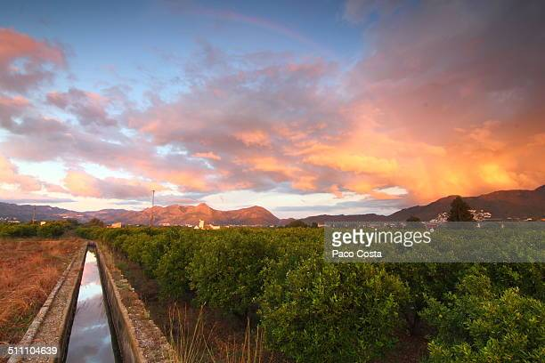 irrigation ditch next to an orange grove - orange orchard stock photos and pictures