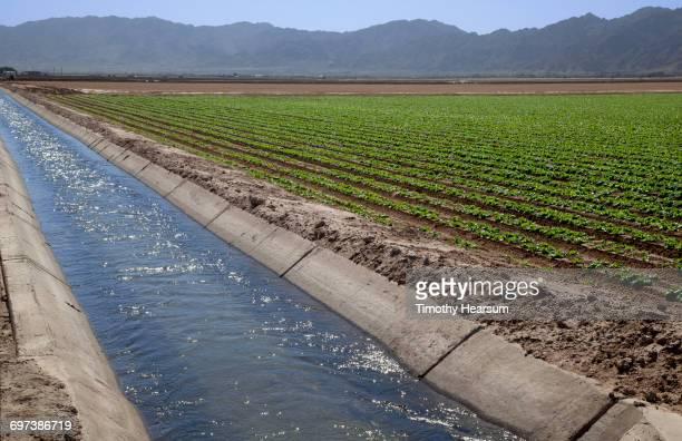 irrigation ditch running along side lettuce field - timothy hearsum fotografías e imágenes de stock