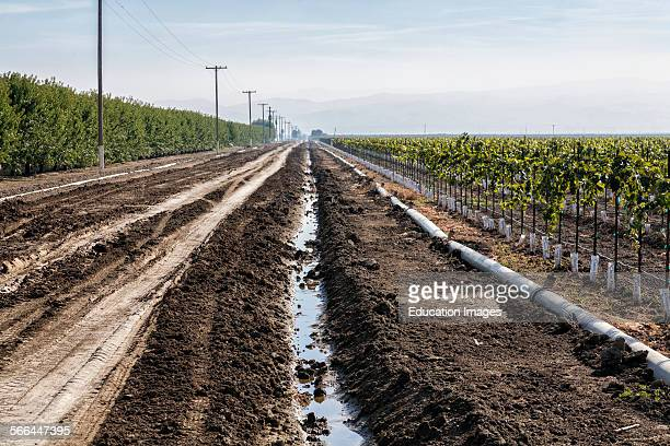 Irrigation ditch running next to vineyard and almond orchard Rod Cardella runs Cardella Winery a family business since 1969 which grows almonds...