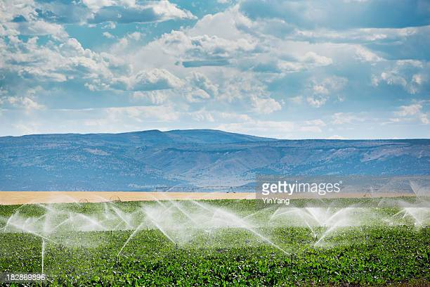 irrigation equipment, agricultural water sprinklers watering farm plants crop field - sprinkler system stock pictures, royalty-free photos & images