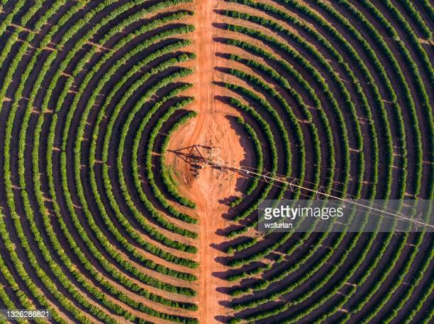 irrigation equipment at a coffee plantation - brazil stock pictures, royalty-free photos & images