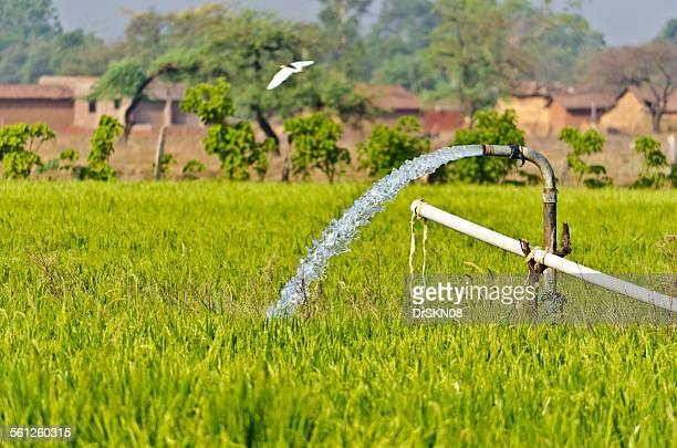 Irrigation in paddy field