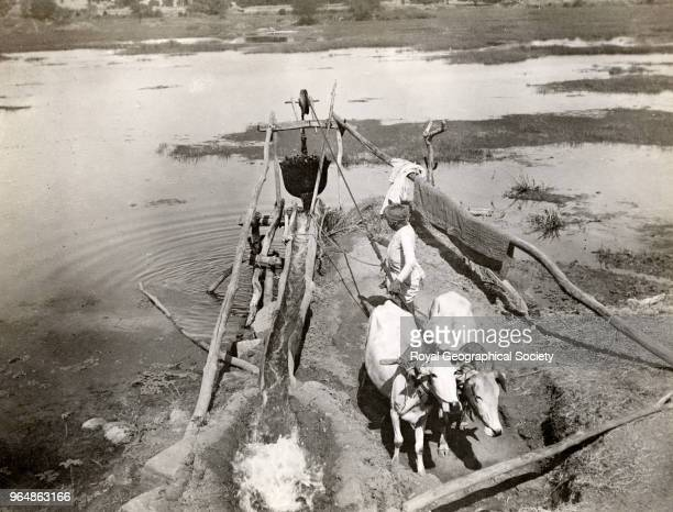 Irrigation in the Central Provinces India 1904