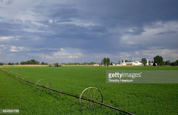 irrigation mechanism in alfalfa field; farm beyond - timothy hearsum stock pictures, royalty-free photos & images