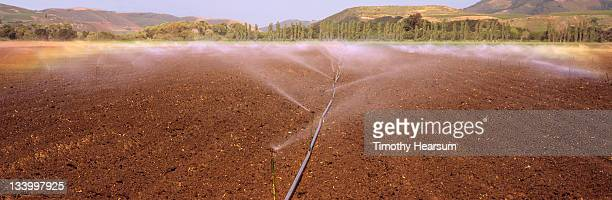 irrigation of newly-planted lettuce field - timothy hearsum stock-fotos und bilder