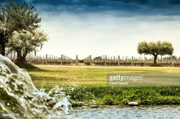 Irrigation of the vineyard