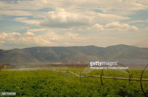 irrigation pipes spraying water on a field of potatoes, mountains beyond - timothy hearsum stock pictures, royalty-free photos & images