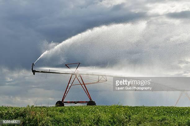 Irrigation pivot on the wheat field