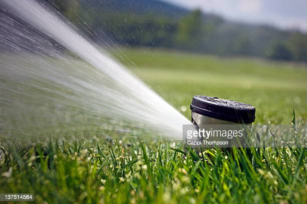 irrigation sprinkler - sprinkler system stock pictures, royalty-free photos & images
