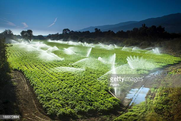 irrigation sprinkler watering crops on fertile farm land - irrigation equipment stock pictures, royalty-free photos & images