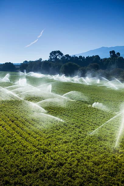 Irrigation Sprinkler Watering Crops On Fertile Farm Land Wall Art
