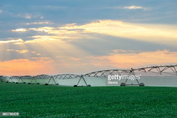 irrigation system watering agricultural fields - sprinkler system stock pictures, royalty-free photos & images