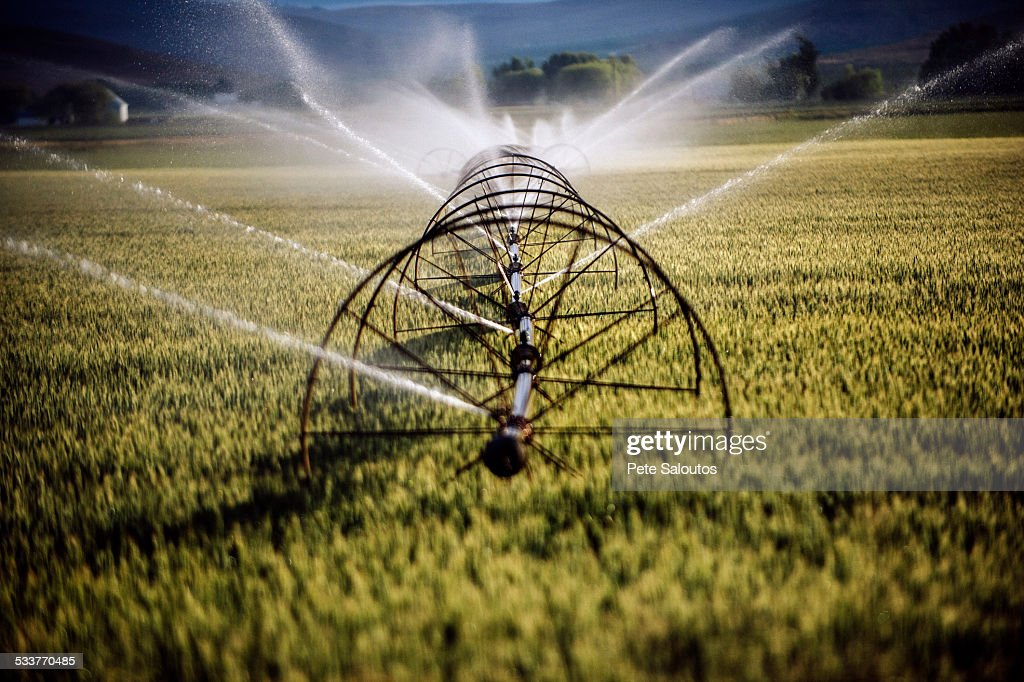 Irrigation system watering crops on farm field : Stock Photo