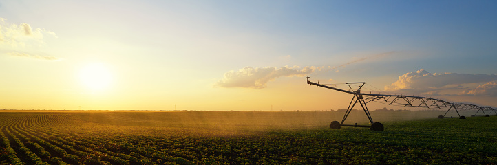 Irrigation system watering soybean field - gettyimageskorea