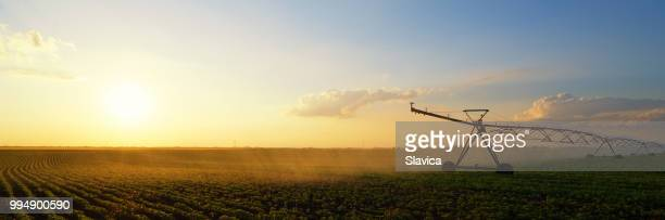 irrigation system watering soybean field - sprinkler system stock pictures, royalty-free photos & images