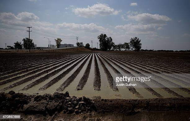 Irrigation water floods a plowed field on April 23 2015 in Tipton California As California enters its fourth year of severe drought farmers in the...