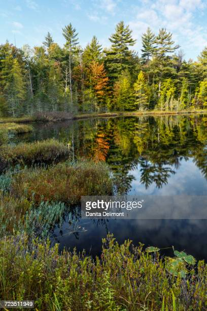 irwin lake and bog, hiawatha national forest, upper peninsula of michigan, usa - hiawatha national forest stock pictures, royalty-free photos & images