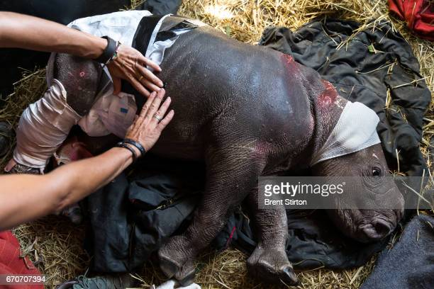 AFRICA is a donor run NGO that specializes in caring for wounded animals They have a special focus on rhino and have taken in many rhino orphans from...