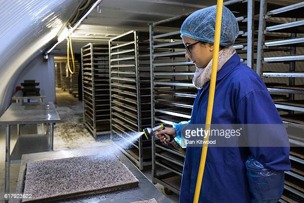 Isabel waters seeds in one of the Underground tunnels at 'Growing Underground' in Clapham on October 24 2016 in London England The former air raid...