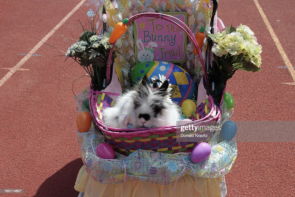 Isabella, a Lion Head bunny, attends the Woofin Paws pet fashion show at Carey Field on March 30, 2013 in Ocean City, New Jersey.
