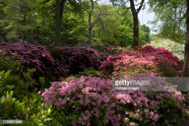 Isabella Plantation Richmond Park Richmond Surrey England UK 14/5/10 Spectacular Azaleas and Rhododendrons in the spring at the woodland garden of...