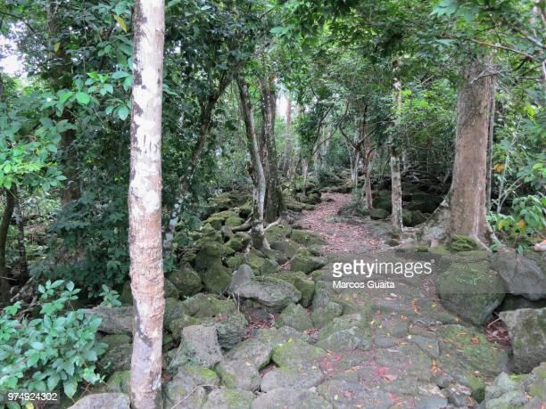 isla de horacio en malabo - malabo stock pictures, royalty-free photos & images