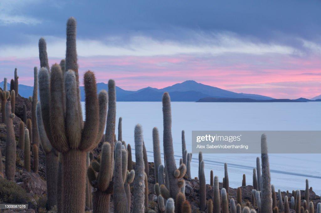 Isla del Pescado sunset with cacti and dramatic sky, Potosi, Bolivia, South America : Stock Photo