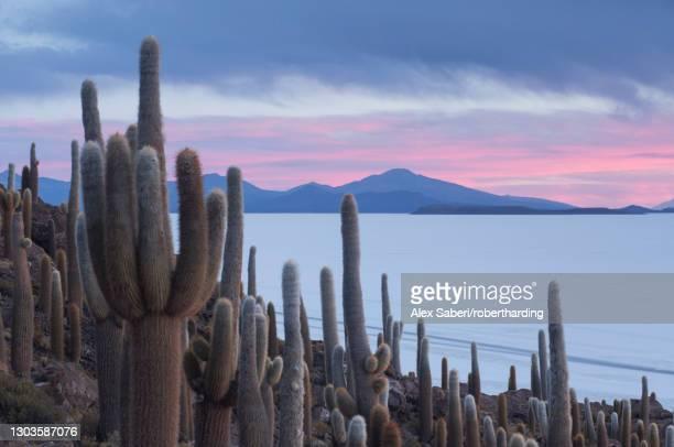 isla del pescado sunset with cacti and dramatic sky, potosi, bolivia, south america - alex saberi fotografías e imágenes de stock