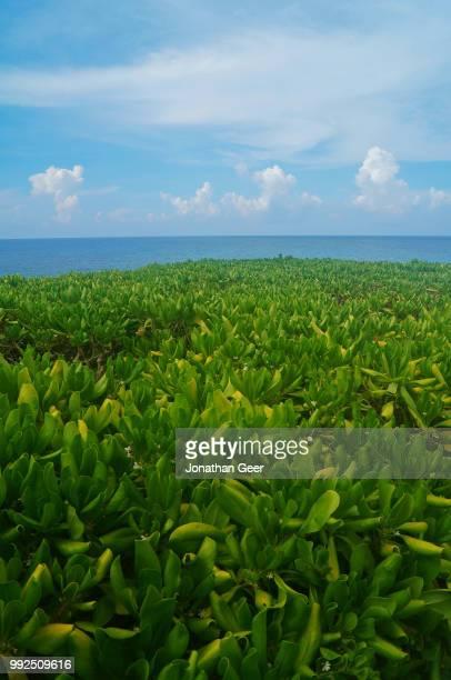 isla mujeres greenery and ocean - mujeres fotos stockfoto's en -beelden