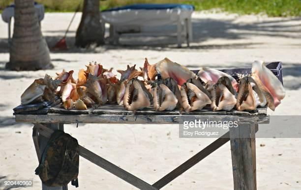 Isla Saona - Seashells - Playas