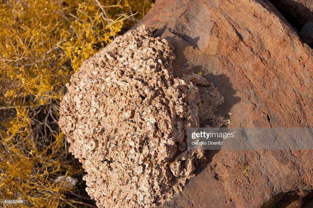Island fish with millenarian cactus, Uyuni salt flats : Stock Photo