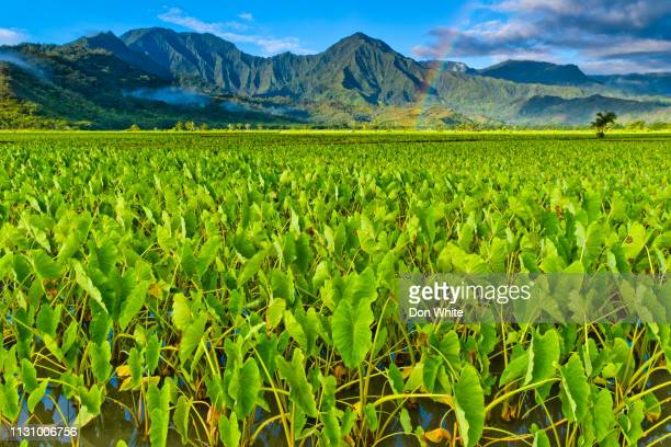 island of kauai in hawaii - hawaii islands stock pictures, royalty-free photos & images