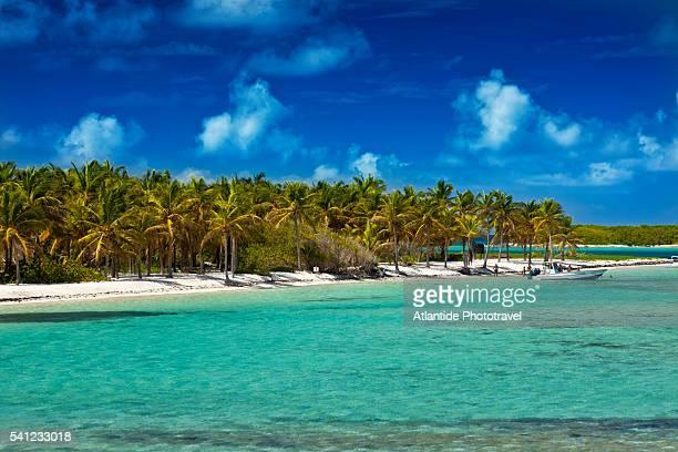 island of la petite terre - guadeloupe photos et images de collection