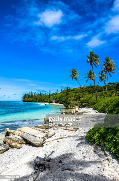 isle of pines - new caledonia stock photos and pictures